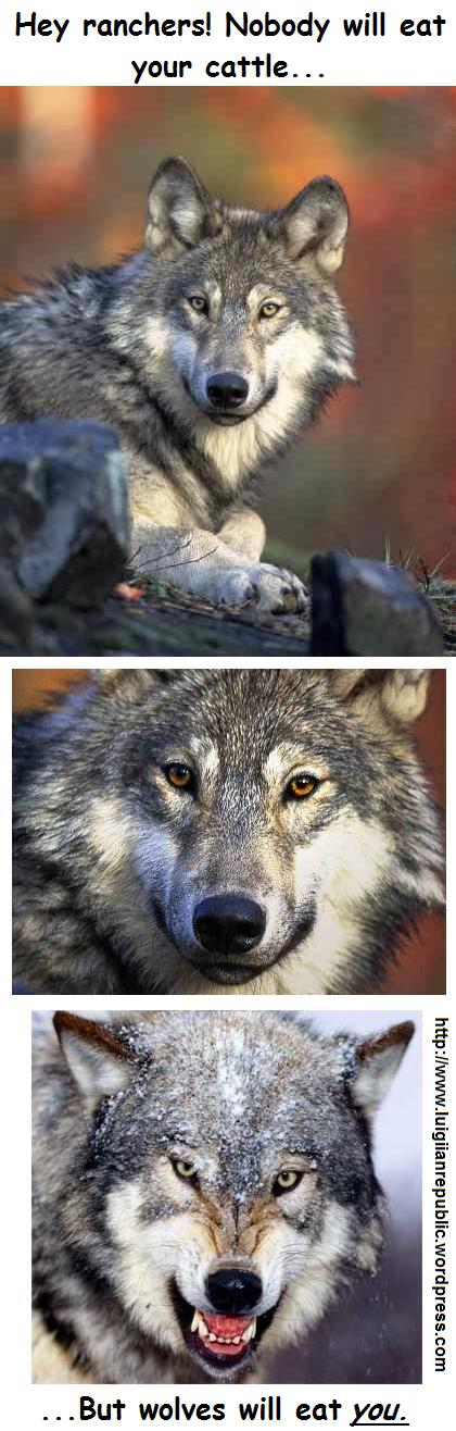 Hey ranchers! Nobody will eat your cattle… but wolves will eat you.